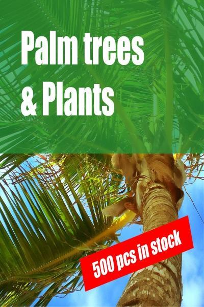 palm-tree-sint-maarten-sxm