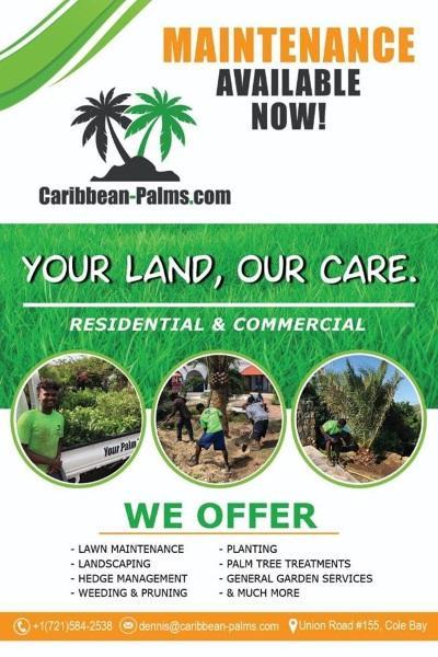 caribbean-palm-sxm