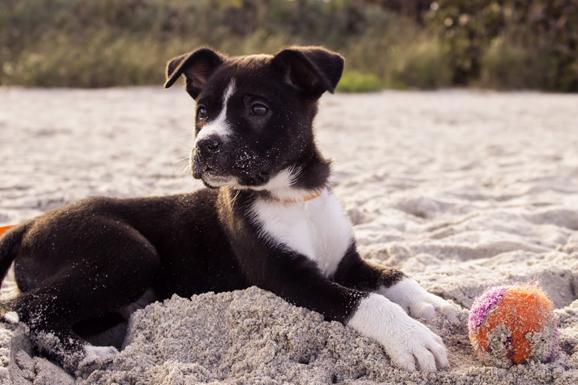 Chien qui s'amuse sur la plage